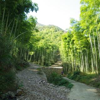sp1~cp2 竹林 Part1